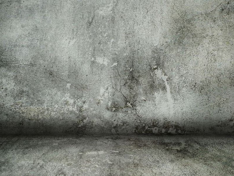 Never use Bleach To Kill Mold On Concrete